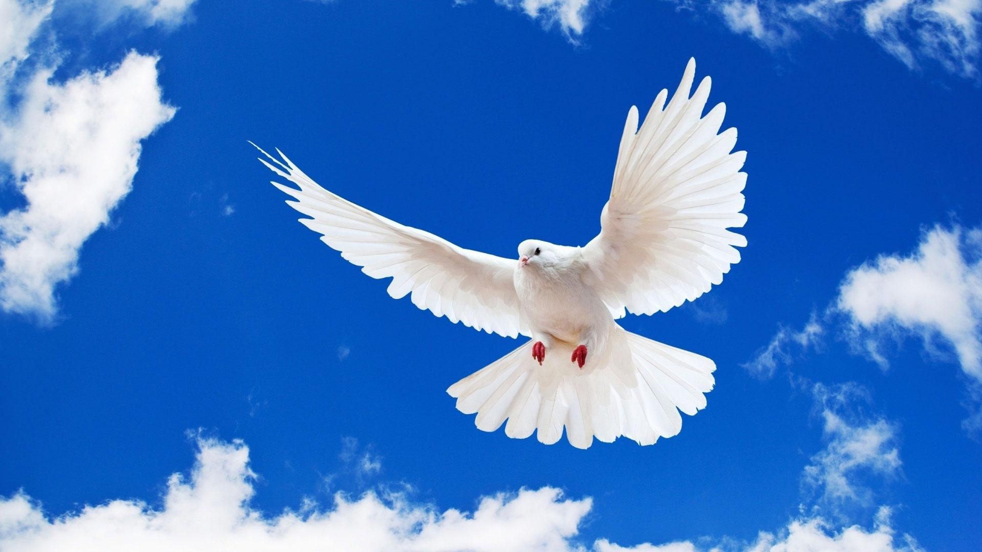 что картинки с голубями на земле дают множество советов